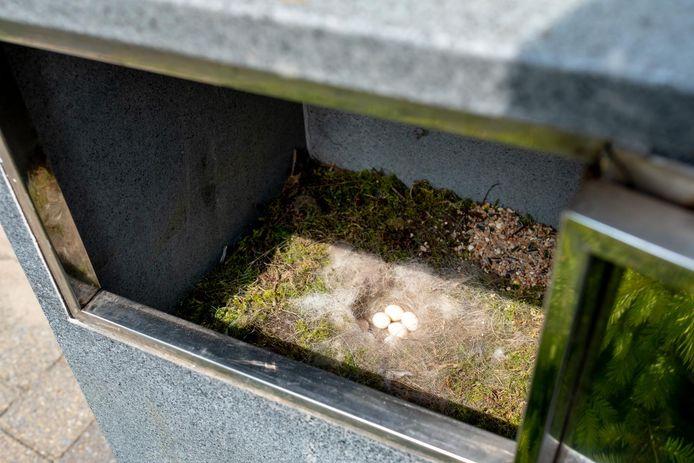 Er liggen 8 eitjes in de brievenbus van Carla Steenackers.