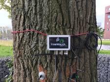 Wageningse boom heeft eigen Twitter-account en tweet zelf