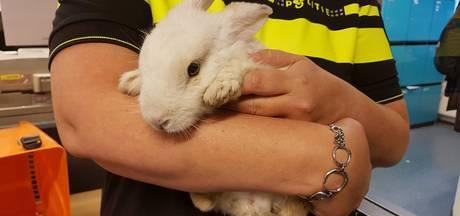 Politie zoekt baasje van avontuurlijk konijn
