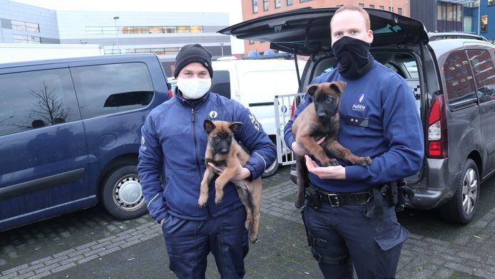 Inspecteurs de Groote (links) en Deleu met Jack en Bolt, de twee piepjonge Mechelse herders die op termijn zullen functioneren als twee volwaardige patrouille- en actieve drughonden in de politiezone Arro Ieper.