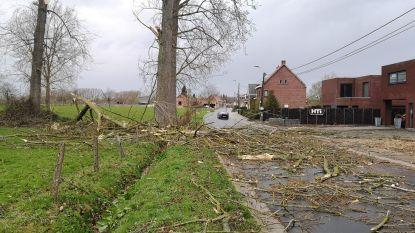 Eikestraat versperd door afgeknakte boom