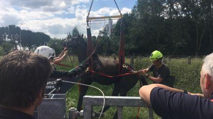 Paard uit gracht gered
