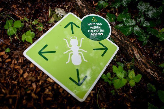 Ook tussen de reuzeninsecten moet vanwege het coronavirus afstand worden gehouden: 1,5 meter ofwel 300 gewone mieren.