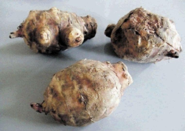 De wrattige knollen van de aardpeer smaken naar walnoot en artisjok. (Trouw) Beeld