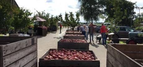 Landelijke plukdag trekt honderden fruitliefhebbers naar Noordoostpolder