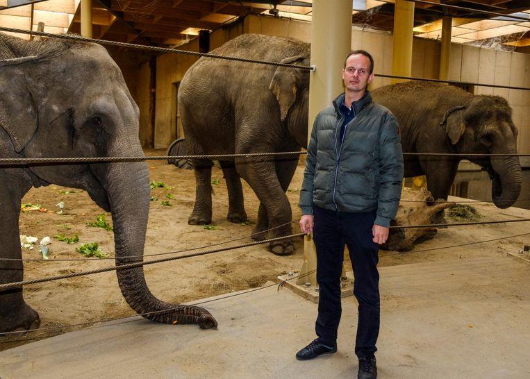 Verzorger Sander Hofman bij de drie zwangere vrouwtjesolifanten.