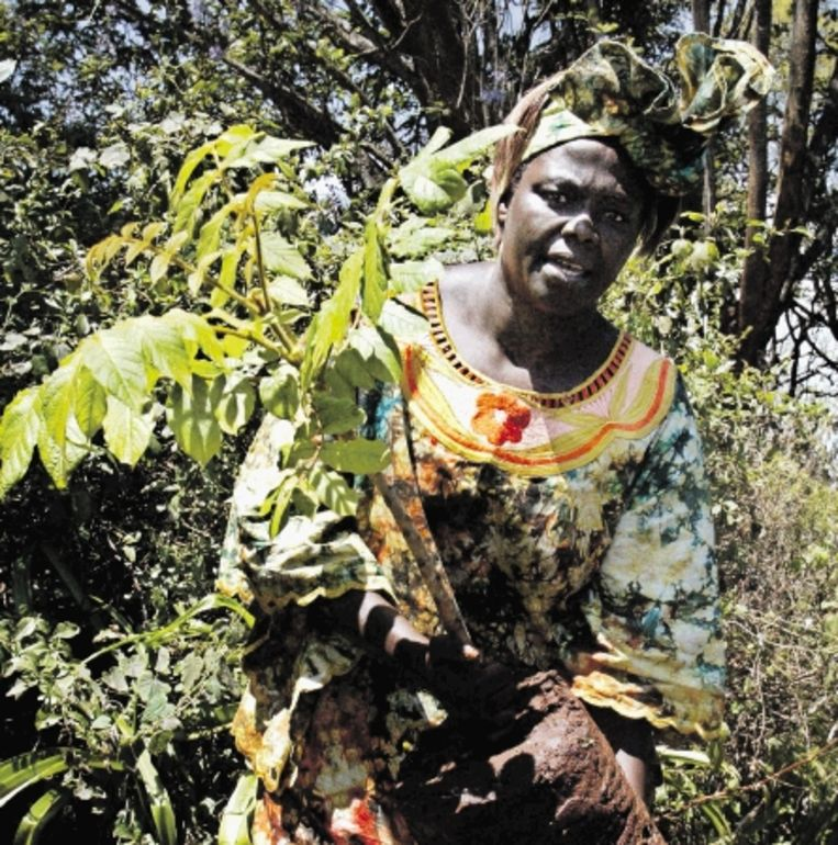Milieuactivist Wangari Maathai, de eerste Afrikaanse vrouw die de Nobelprijs voor de vrede won. (FOTO AFP) Beeld AFP