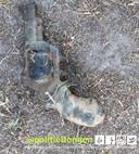 Magneetvissers vinden oude revolver in Dongens kanaal