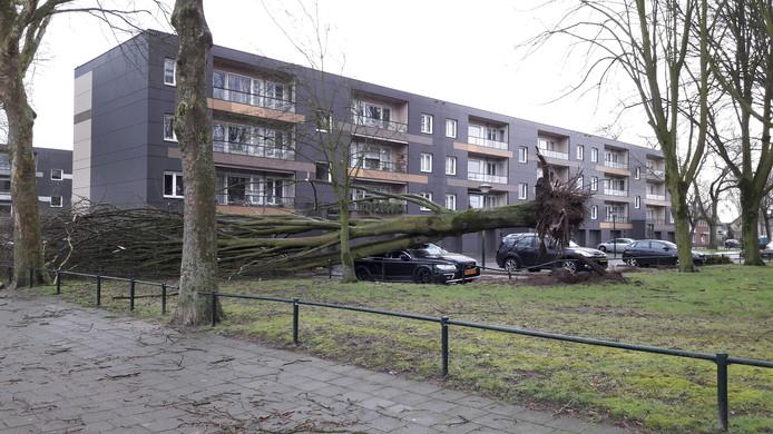 Aan de Lindenhof in Geldrop is een boom op een auto gevallen.