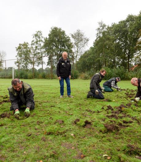 'Onsportief' zwijn op sportpark in Reusel
