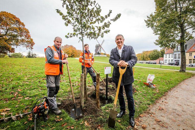 Schepen Philip Pierins en de groenarbeiders aan het boompje.