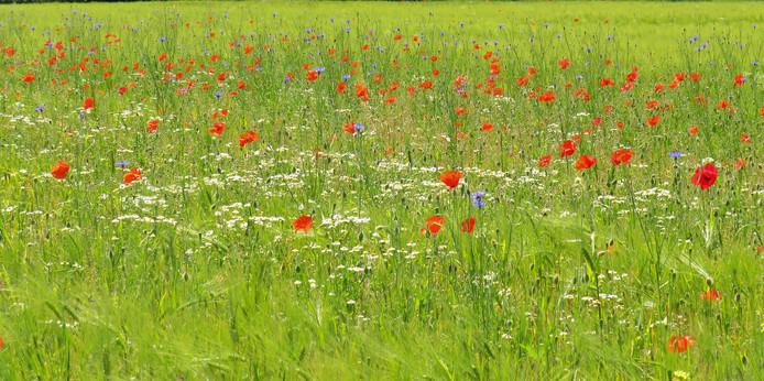 Het Groene Woud geeft subsidie om ook daar de biodiversiteit te stimuleren.