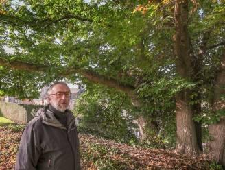 """Vierstammige kastanjeboom aan de vestingen in Ieper is 'Boom van het Jaar': """"Hij doorstond de twee Wereldoorlogen en is ruim 150 jaar oud"""""""