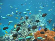 Burgers' Zoo uit Arnhem exporteert koraalrif naar Londen