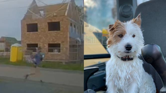 """Loper die hondje Dribbel doodstak verdedigt zich, baasje vindt reactie """"misplaatst"""" en """"onwaar"""""""