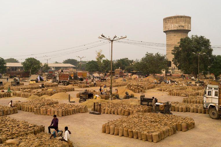 De graanmarkt in Amritsar, waar elke dag 5 miljoen kg rijst wordt verhandeld in grote zakken van 50 kilo. Beeld Adriane Ohanesian