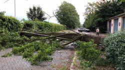 Onweer trekt over het land: boom verspert rijbaan in Schelle