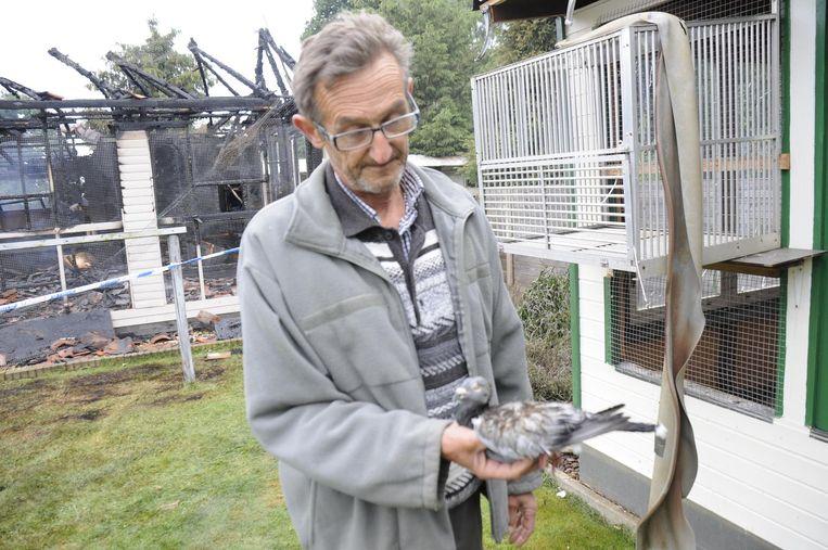 Jef toont een van zijn duiven, die zwaar verbrand geraakte. Hij weet niet of het beestje zal overleven.