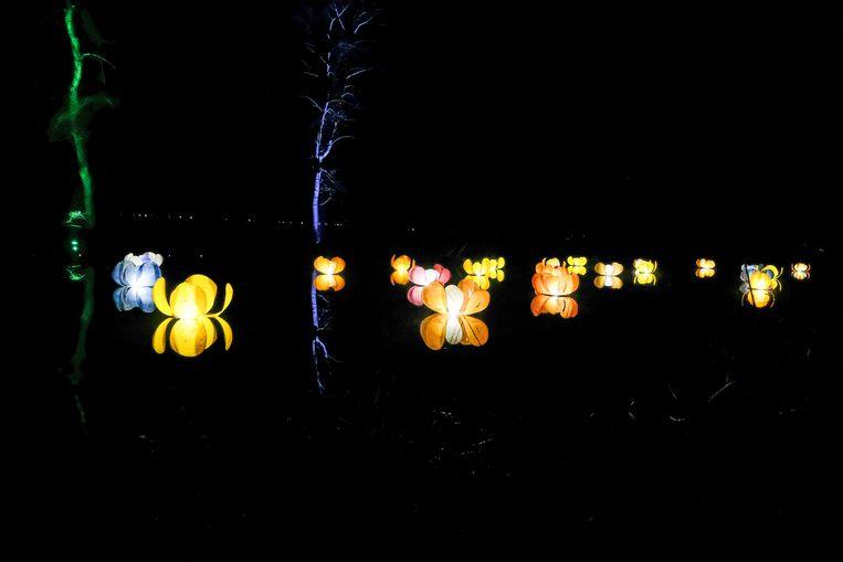 lichtspektakel in de plantentuin van Meise