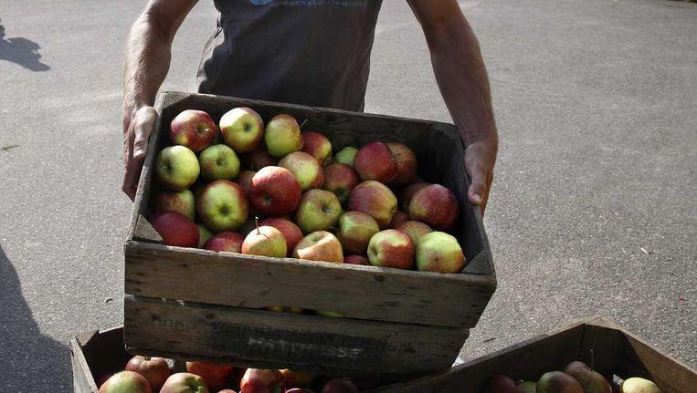 De Russische afzetmarkt is voor appeltelers volledig verloren gegaan. Velen kunnen hun oogst nergens kwijt. Beeld anp