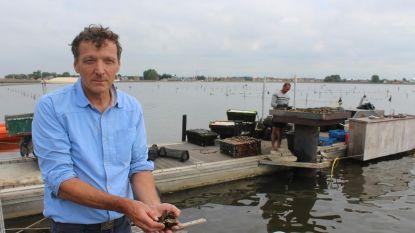 """""""Zuurstoftekort in Spuikom tast oesters niet zwaar aan"""""""