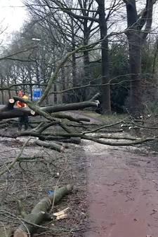 Westerstorm: fietser waait weg, vrouw komt onder boom terecht