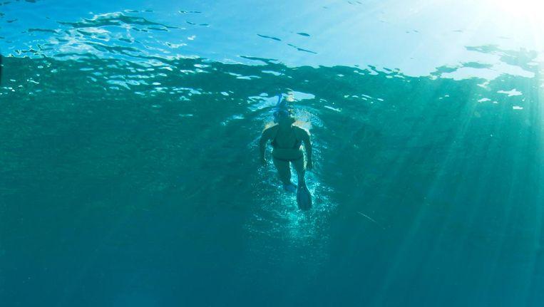 Koraal begint af te sterven, veel vissoorten krijgen het wegens een opwarmende en verzurende oceaan moeilijker, zo schrijft Stephan Huijboom Beeld GettyImages
