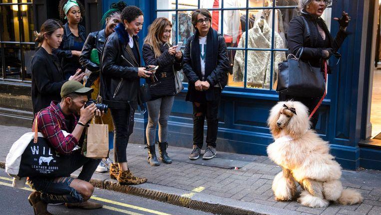 Een designer dog wordt gefotografeerd in de hippe Londense wijk Soho tijdens de London Fashion Week.