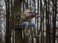 Verscherpte strijd tegen het wilde zwijn in Soerendonk