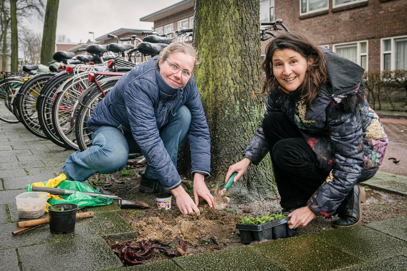 Guerrilla Gardeners Mariëlle Stegeman (l.) en Cerian van Gestel in actie in de Van Humboldtstraat in Utrecht.