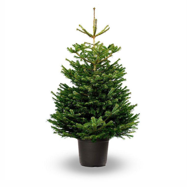 Groen 5/12- Kerstbomen - normann