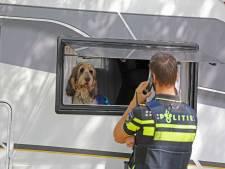 Vermiste hond na reddingsactie Efteling-terrein is terecht