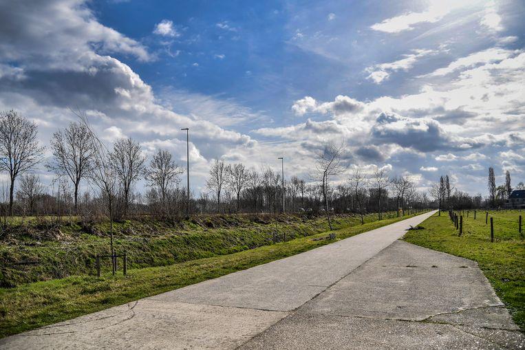 Langsheen de N41 in Grembergen zouden er dit jaar nog meer bomen aangeplant moeten worden.
