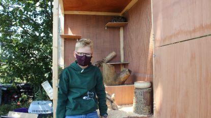 Andreas (13) is één van de jongste ondernemers in het Pajottenland met eigen bedrijfje 'Lapino'