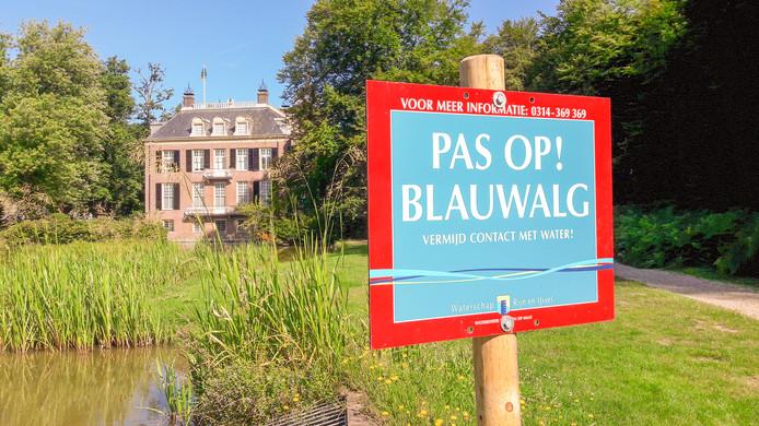 Blauwalg in de slotgracht van Huis Zypendaal in Arnhem.