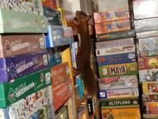 Eekhoorn krijgt geen genoeg van spelletjes en verstopt zich in een Bredase spellenwinkel