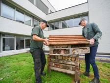 Osse bijen: ga toch op het dak zitten