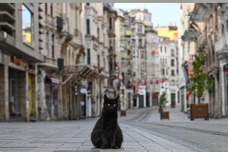 Een zwerfkat in een lege winkelstraat in Istanbul.  Beeld AFP