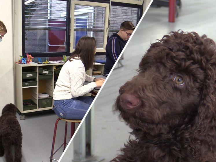 Deze leerlingen hebben een wel heel bijzondere leraar: schoolhond Vos