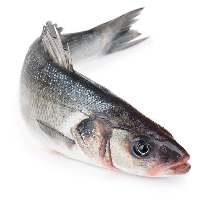 Een zeebaars, een vis die de leden van de hengelsportvereniging Westkapelle graag vangen