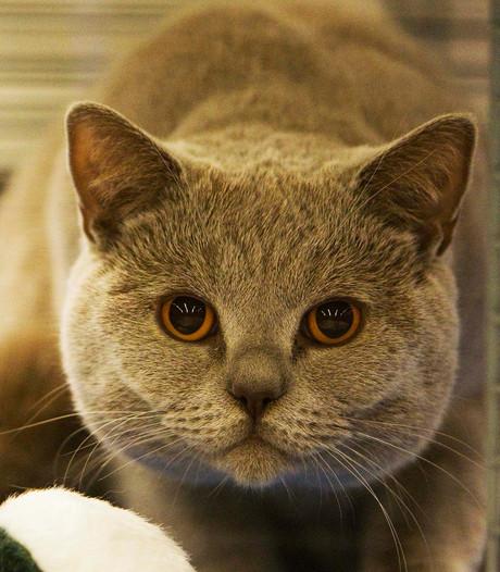 Verdwenen Nederlandse kat reist 1.000 kilometer