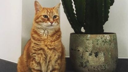 Mysterieuze verdwijning van katten in De Volderstraat