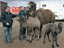 Dierentuin van Bert Roelofs op stapel in Appeltern: 'Contact tussen bezoekers en dieren'