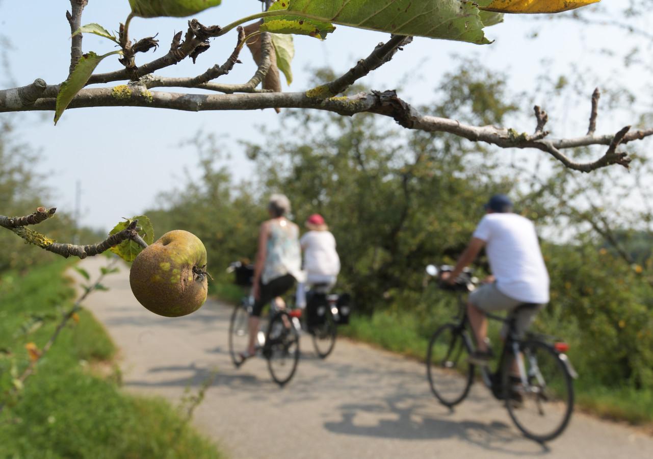 Door de droogte en hitte hangen er bijna geen appels aan de bomen aan de Appeldijk in Beesd.