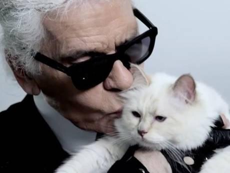 Extreem verwende poes Karl Lagerfeld maakt kans op deel erfenis