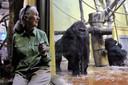 Jane Goodall, vermaard veldwerker in Tanzania