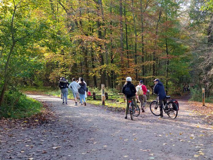 Drukte in het Zoniënwoud: wandelaars genieten van het woud