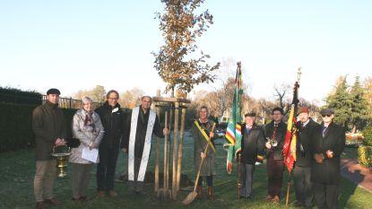 Gent krijgt vier extra vredesbomen