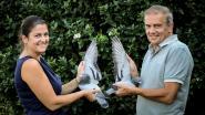 Strafste duivenmelker van Vlaanderen verkoopt noodgedwongen al zijn vogels: veiling brengt al meer dan 5 miljoen euro op