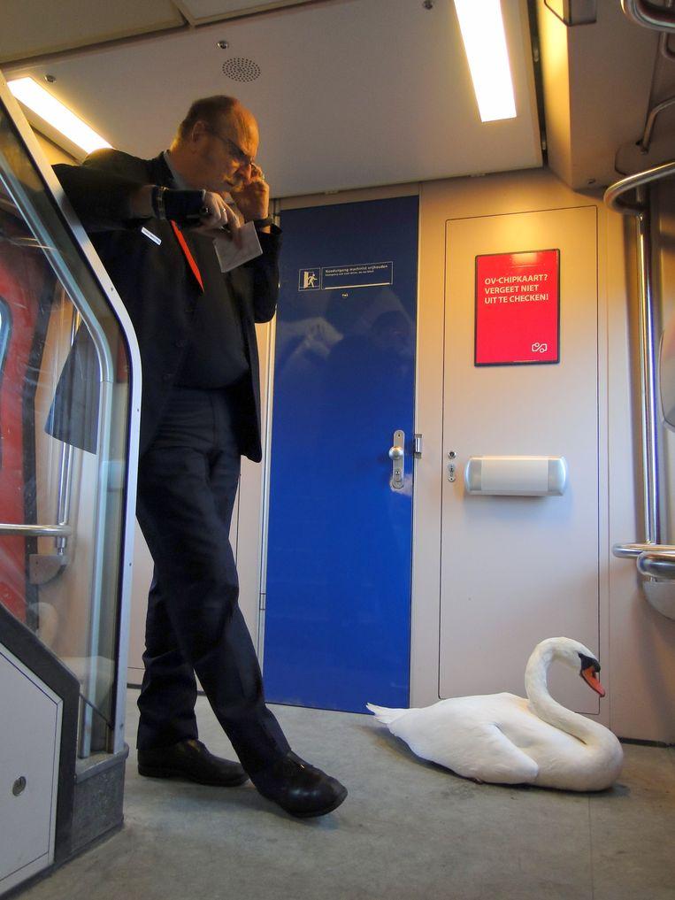 Een gewonde zwaan krijgt een lift naar het station waar de dierenambulance klaarstaat. Beeld Bas Bogers